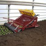 Bänderpflanzmaschine für Feldsalat in Gewächshaus