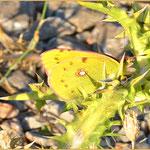 Schmetterling Name unbekannt