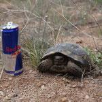 Red Bull verleiht Flügel..vielleicht bin ich dann etwas schneller unterwegs...?