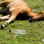 ...ein Liter Vodka ist einfach zu viel für mich..kann gar nicht mehr aufstehen...