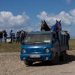So werden die Pferde in Kirgisien transportiert!