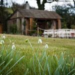 Karen & Paul, Millbrook Estate - Indigo Perspective Photography