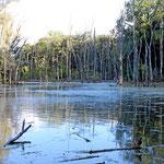 Naturschutzgebiet Petit Camargue St. Louis Frankreich