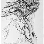 Bleistiftzeichnung Bäume