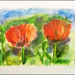 Aquarell Mohnblumen Bildmaß: 24 x 32 cm