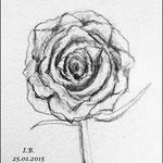 Bleistiftzeichnung/Der Fehler:Rose frontal abzubilden.Die Blüte leicht schräg oder sogar liegend und den Stiel horizontal abzubilden wäre günstiger