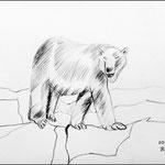 Bleistiftzeichnung Tiere