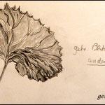 Bleistiftzeichnung Blätter