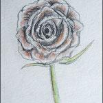 Rose mit Buntstiften bearbeitet