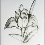 Blütenteile in geometrischen Formen zeichnen