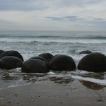 The picturesque Moeraki boulders on or way to Dunedin