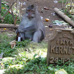 Monkeys sitting on the graves at a cementary