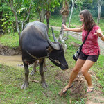 ... attacked by a water buffalo ;-)