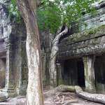 Ta Prohm... the sun is rising slowly