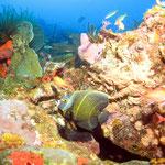 voyages pour célibataires, partirseul.com, plongée en Martinique