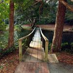 Lagoon bridge - summer