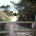 Footpath over the dunes
