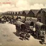 Colombo Harbour_ wharf bullock carts