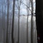 Am Rückweg war der Nebel etwas höher als beim Aufstieg