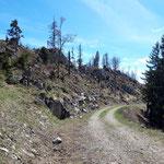 Kurzer Wegabschnitt über eine Forststraße