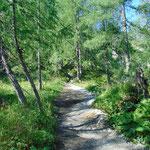 Durch den idyllischen Wald
