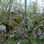 Eine kurze Felskraxelpassage trennt uns noch vom Gipfel