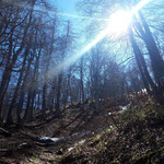 Über den Waldhang retour