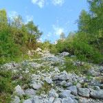 Hier beginnt der Übergang vom Wald zum Latschenwald, hin zum Geröllfeld
