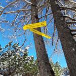 Kurz unterhalb des Gipfels gabelt sich der Weg - der Einstieg zum Priel Klettersteig ist ebenfalls in der Nähe
