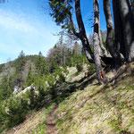 Waldweg zwischen Spitzmäuerl und Tamberg
