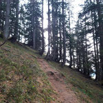 Weiter über den Waldpfad