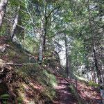 Steiler Aufstieg über den Waldweg