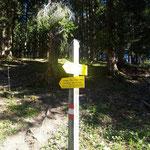 Bei diesen Schildern verlassen wir die Forststraße und wandern weiter über den Waldpfad