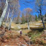 Steiler Wegverlauf durch den Wald
