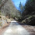 Wegverlauf auf der Forststraße