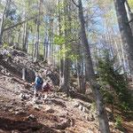 Weiter durch den Hochwald