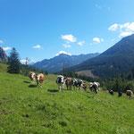 Zunächst geht es gemütlich über die Almwiese, einige Kühe beobachten uns dabei