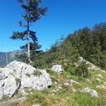 Areal rundum die Poppenberg Aussichtsplattform