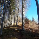 Durch den Wald am Kamm geht es weiter