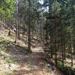 Wegverlauf über den Waldweg