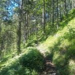 Weiter über den schönen Waldweg