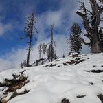 Durch den verschneiten Wald