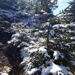 Etwas Schnee am Wegrand