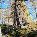 Durch den Wald und über die Almwiesen zwischen Mannsberg und Laglalm