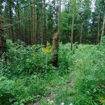 Abzweigung in Richtung des Ochsenkogels