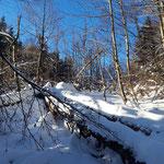 Traumhafte Winterlandschaft entlang des Weges