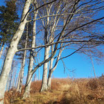 Durch den idyllischen goldenen Herbstwald