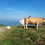 Und wieder vorbei an einer Schar Kühe - auch Kälber waren hier dabei