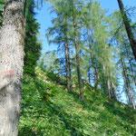 Der Wald selbst ist wunderschön