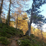 Durch den golden verfärbten Herbstwald geht es weiter